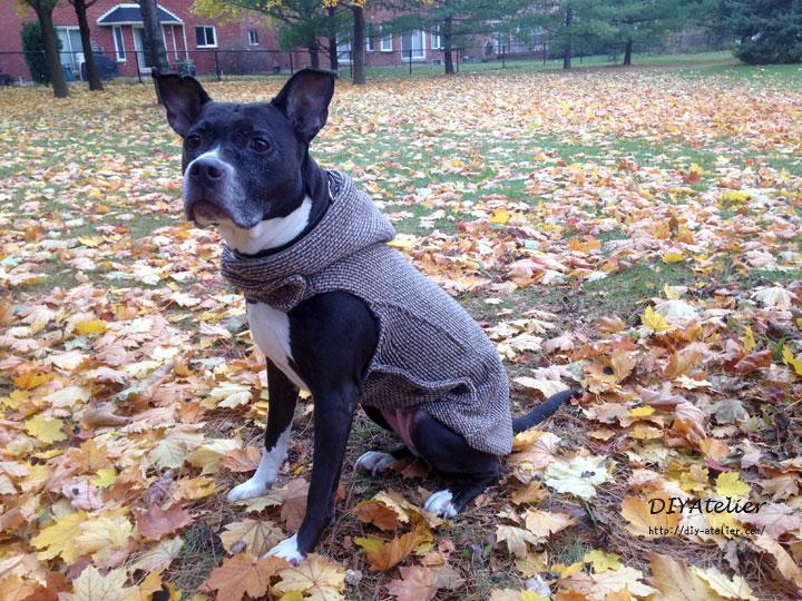 dog_coat01