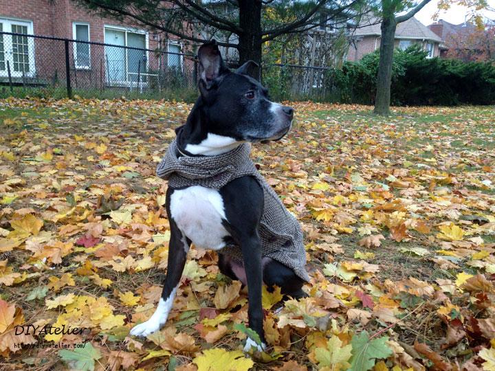 dog_coat09