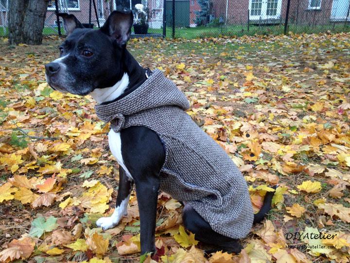 dog_coat08