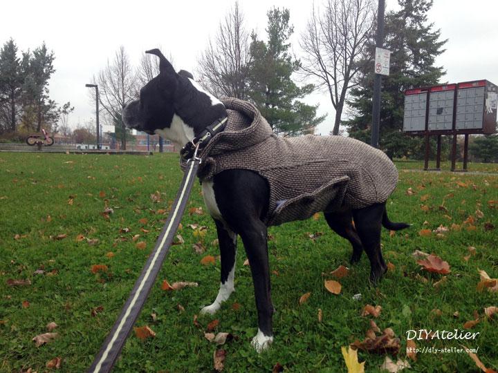 dog_coat10
