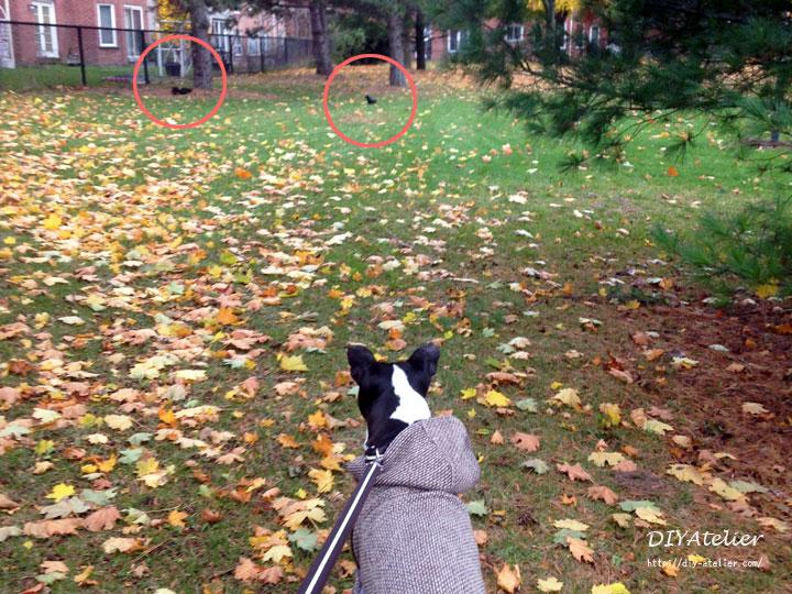 dog_coat11